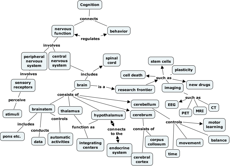 Concept Map Nervous System Answers.Endocrine System Concept Map Answers