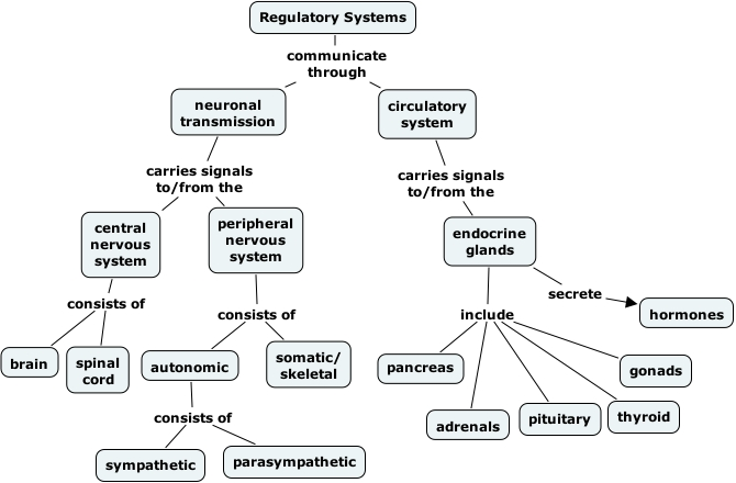 Ihmc cmaptools concept map 5 regulatpry systems ccuart Image collections